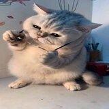 Mèo Ăn Tạp